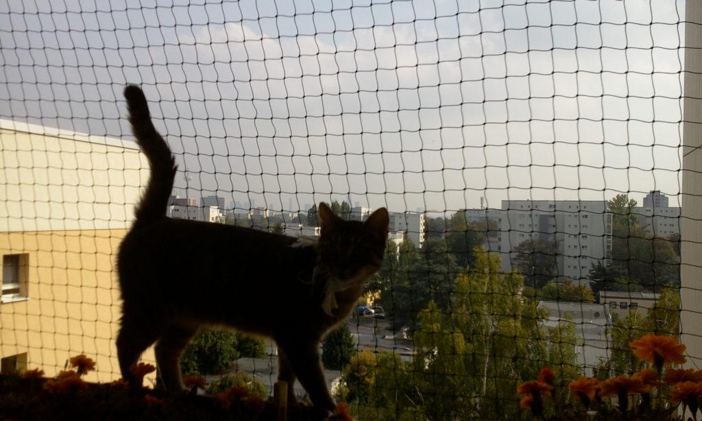 Katze als Freigänger