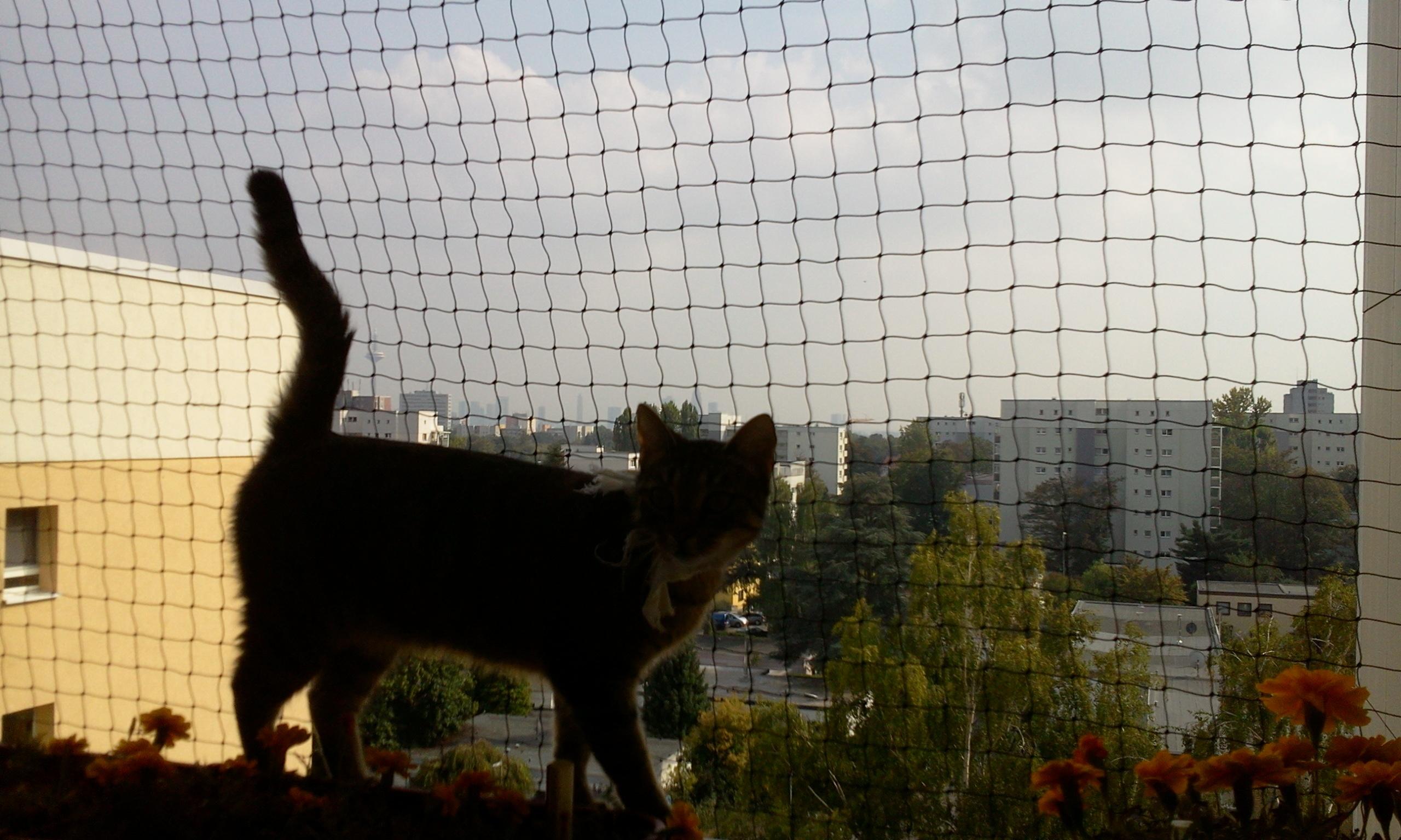 Katzen und recht