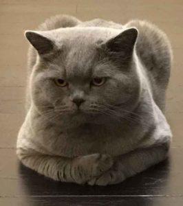 Katzenalter: Wie lange leben Katzen?