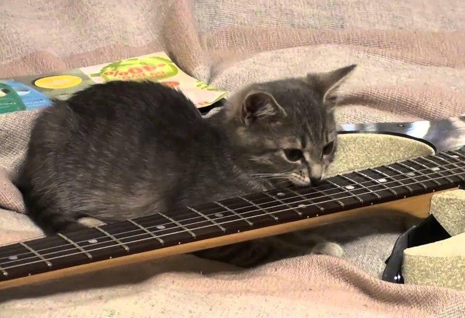 Katzen spiele Katzen spielzeug