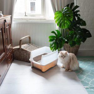Iris Katzentoilette mit Rand und Schaufel