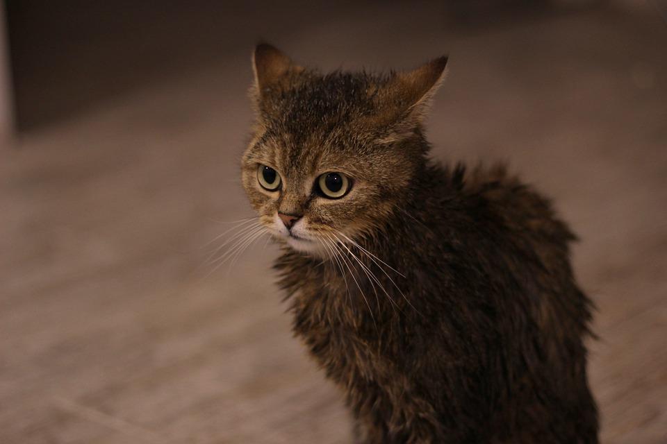Katzen angst vor wasser