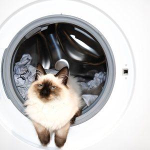 katze waschen