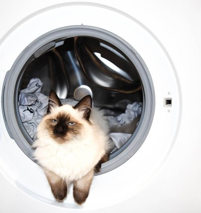 Kann ich meine Katze waschen?
