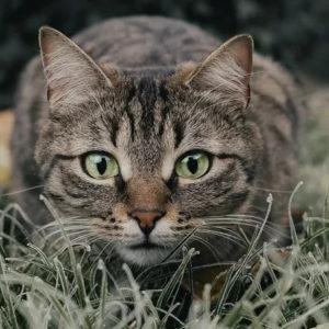 Katze und Laserpointer