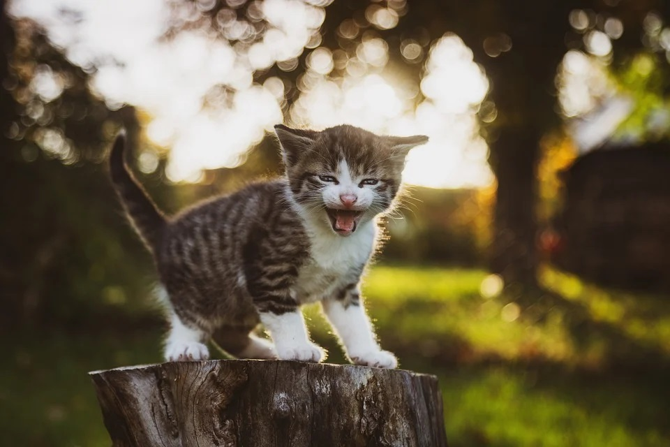 Geschlecht bei Katzenbabys feststellen