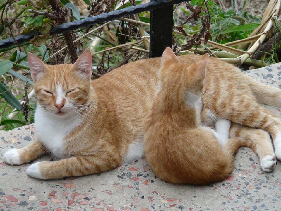 Warum bringen Katzen tote Tiere nach Hause