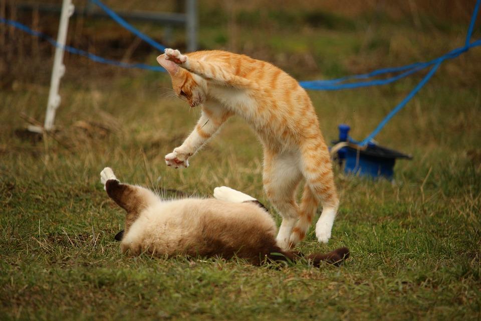 erstopfung bei einer Katze