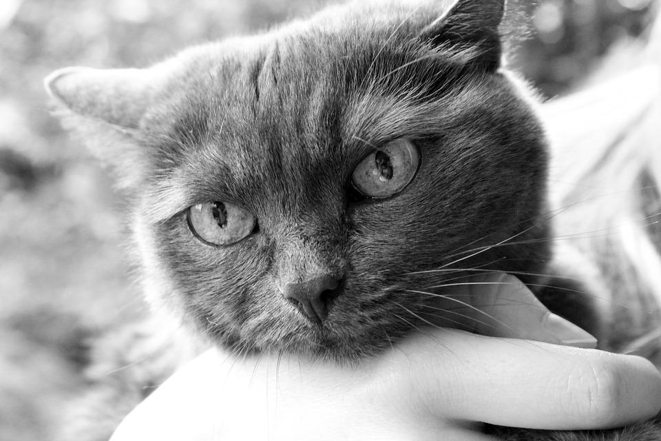 katzen menschen heilen