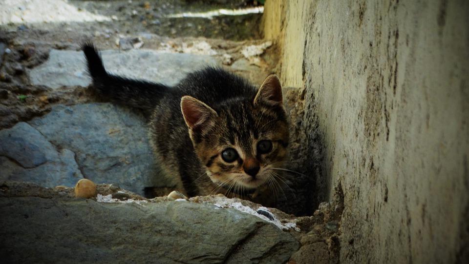 Katze vermisst