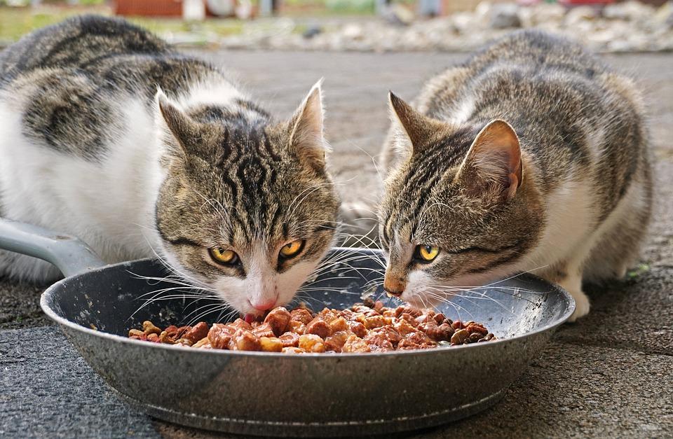 Katzendiabetes