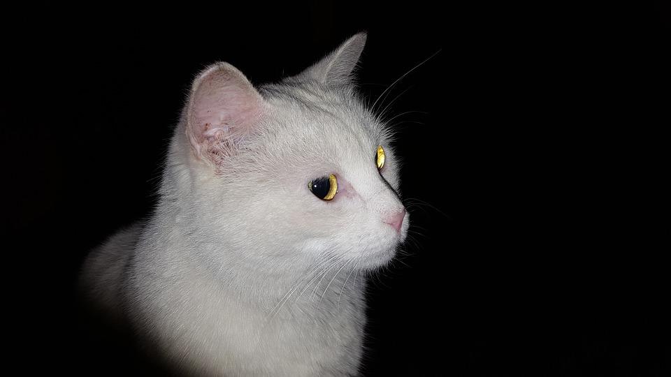 Warum leuchten Katzenaugen