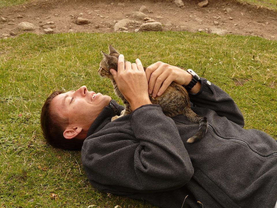 Dinge die Menschen machen und Katzen hassen