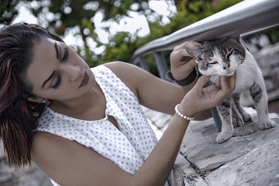 Katze auf ein Baby vorbereiten