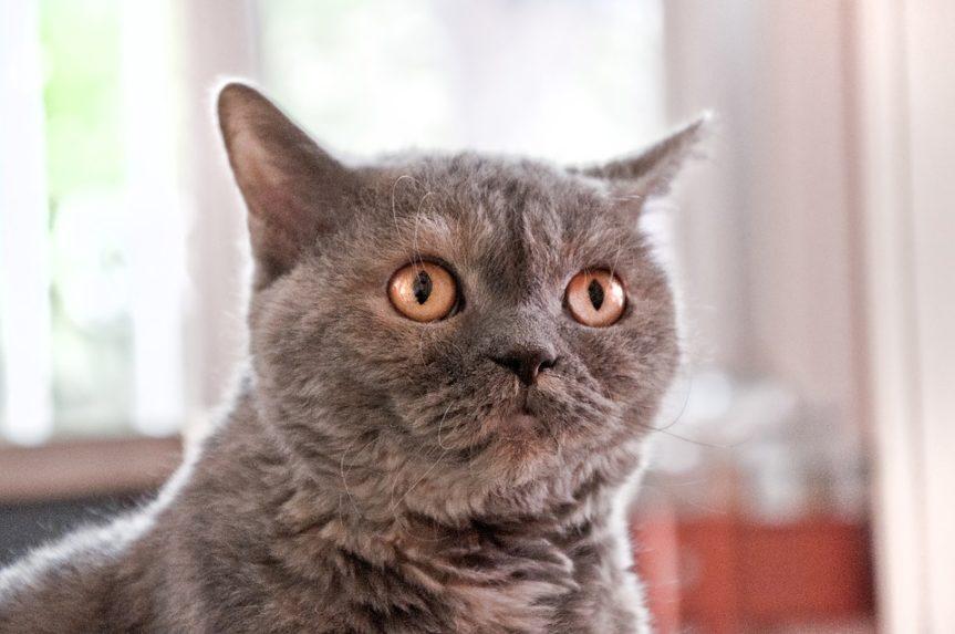 #Warum haben Katzen Angst vor Gurken