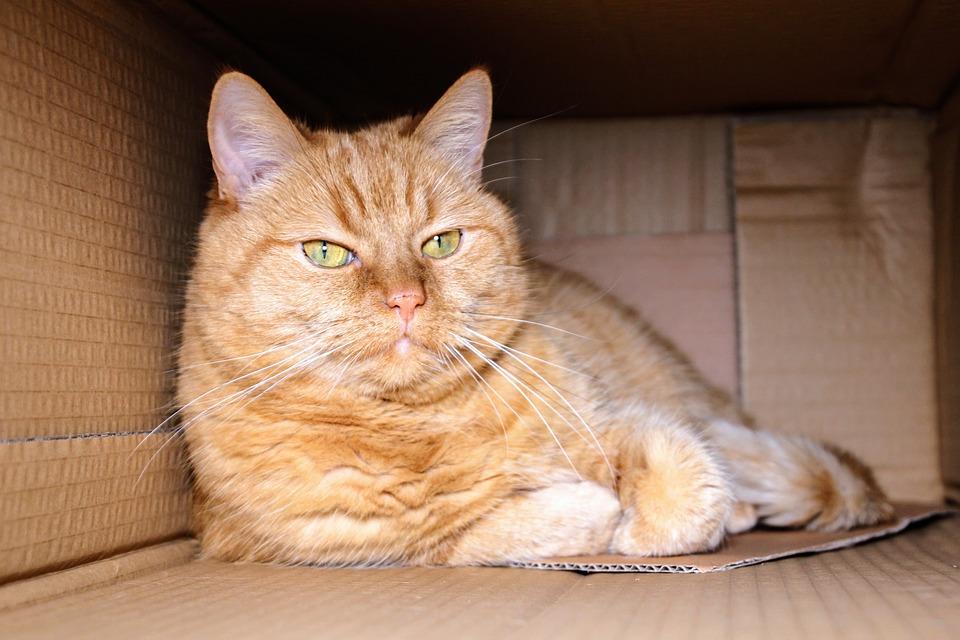 warum sitzen Katzen gerne in Kartons