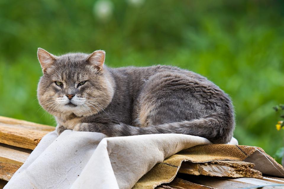 Demenz bei Katzen