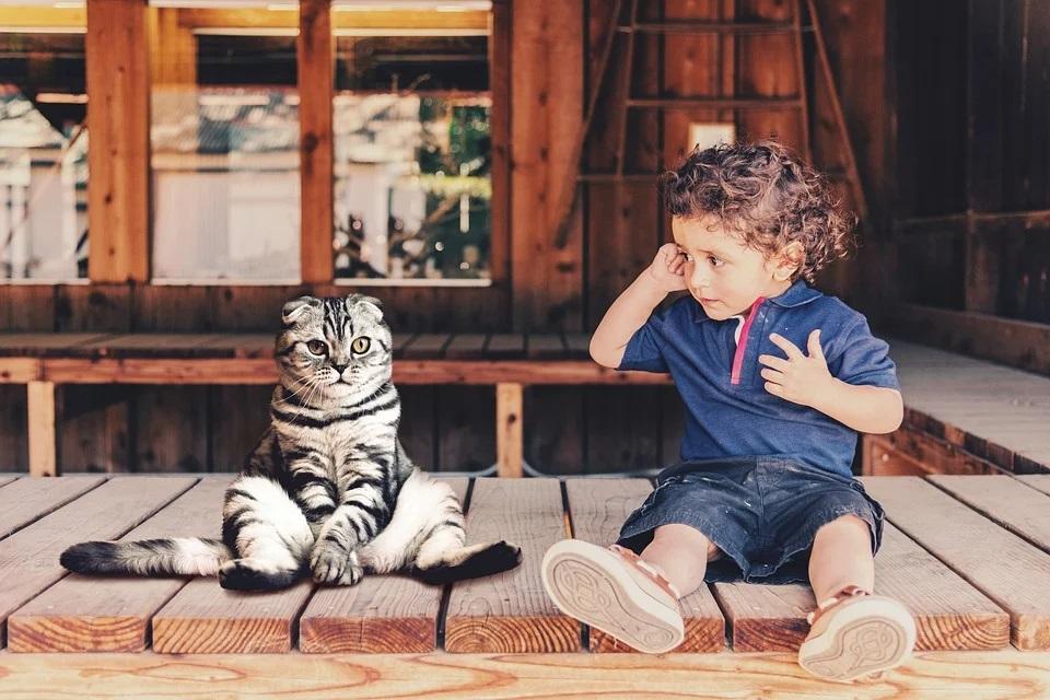 Katzen und Kleinkinder